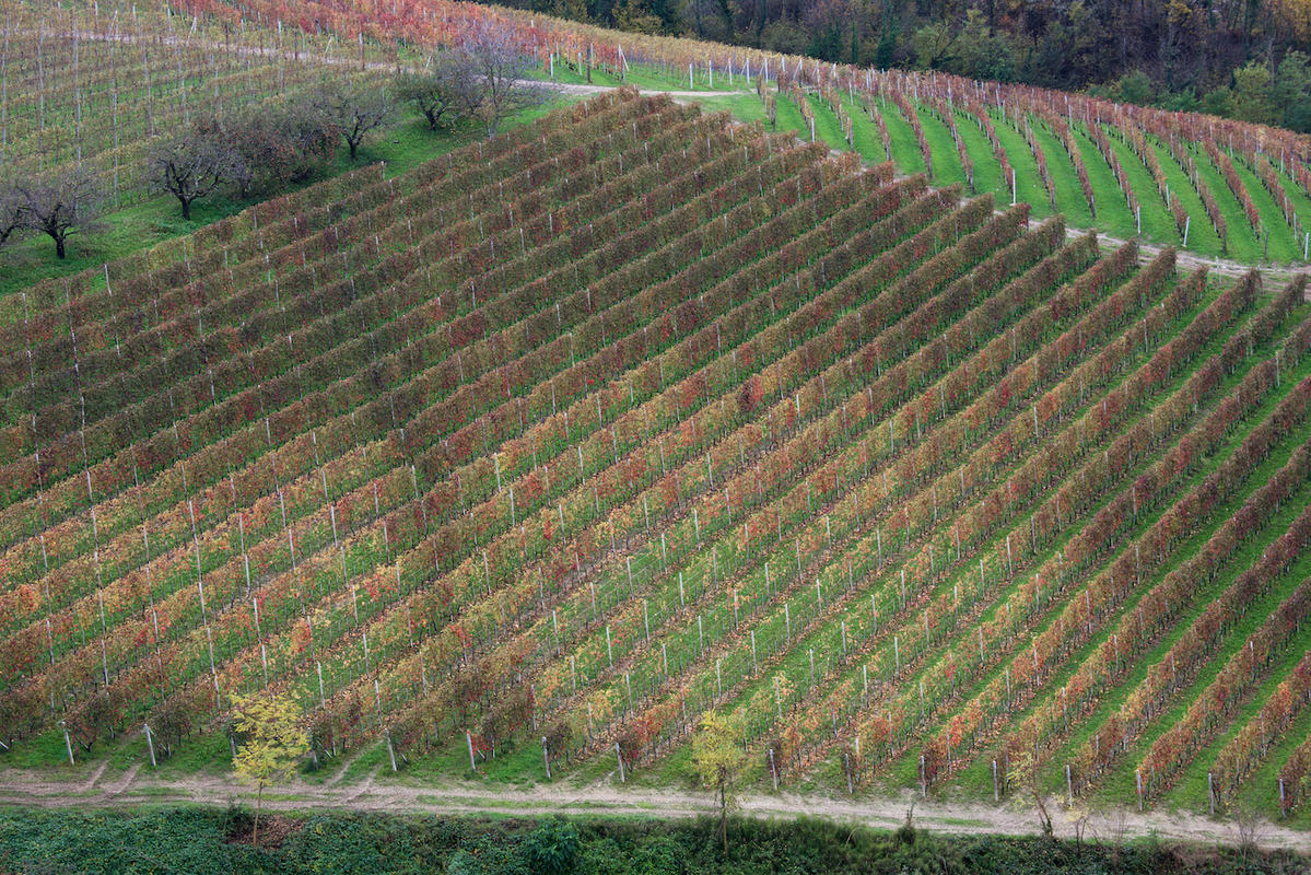 Vineyards 12