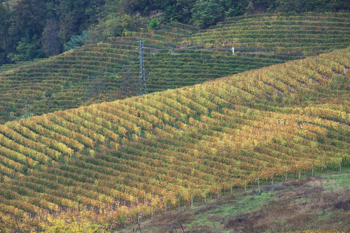 Vineyards 22