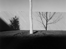 Fences and walls 04
